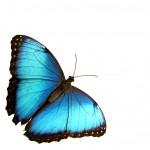 Butterfly-150x1501
