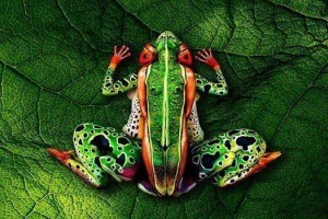 Exotic-frog-300x200